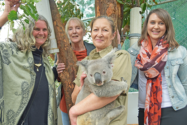 Community grant helps koalas triumph against the odds